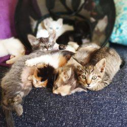 kitten 7
